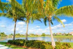 Drei Palmen Lizenzfreie Stockbilder