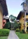 Drei Palmen. Stockbilder