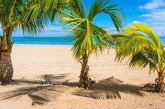 Drei Palmen Lizenzfreies Stockfoto