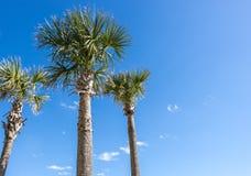Drei Palmen in einem blauen Himmel stockfoto