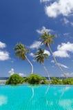 Drei Palmen gegen einen blauen Himmel und einen Ozean Stockfotografie