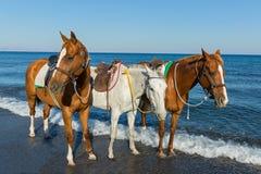 Drei Pferde auf dem Strand Lizenzfreie Stockbilder
