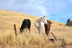 Drei Pferde auf einem Gebiet Stockfotografie