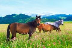 Drei Pferde auf einer Wiese Lizenzfreies Stockfoto