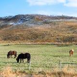 Drei Pferde, die auf dem Gras weiden lassen Lizenzfreies Stockbild