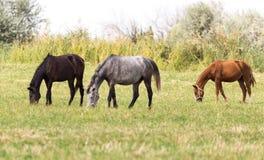 Drei Pferde in einer Weide in der Natur Stockfotos
