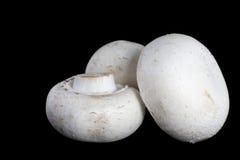 Drei Pilze lizenzfreie stockfotos