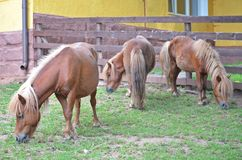 Drei ponnies Lizenzfreies Stockbild