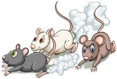 Drei Ratten Stockfoto