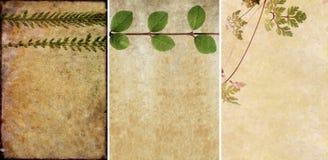Drei reizende Hintergrundbeschaffenheiten Stockfoto
