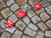 Drei Rosen Stockbild