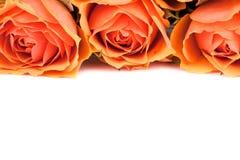 Drei Rosen Stockbilder