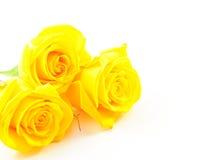 Drei Rosen färben sich auf Weiß gelb Stockfoto
