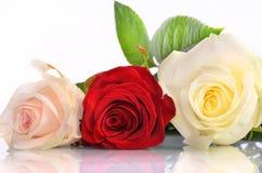 Drei Rosen liegen in Folge Stockfoto