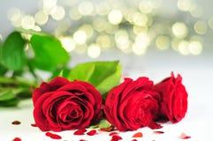 Drei Rosen Rosa-rubiginosa in Folge auf der weißen Tischdecke zwischen Herzen, Gelb und Blaulichtern lizenzfreie stockfotos