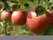 Drei rote Äpfel Lizenzfreie Stockfotos