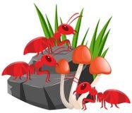 Drei rote Ameisen auf dem Felsen Lizenzfreies Stockbild