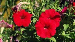 Drei rote Blumen Stockbilder