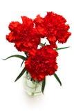 Drei rote Gartennelken Stockbilder