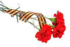 Drei rote Gartennelken gebunden mit St- Georgeband lokalisiert Stockfotografie