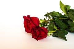 Drei rote Rosen Stockbilder