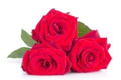 Drei rote Rosen auf weißem Hintergrund Stockfotos