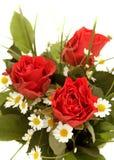 Drei rote Rosen mit grünen Blättern und Kamille Lizenzfreies Stockfoto