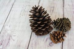 Drei rustikales Pinecones auf einem weißen Scheunen-Brett-Boden Lizenzfreie Stockbilder