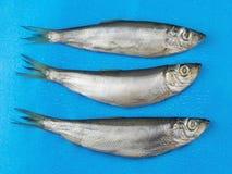 Drei Salzfischheringe auf einem blauen Hintergrund Stockfoto