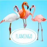 Drei schöne Flamingos auf einem blauen Hintergrund lizenzfreie abbildung