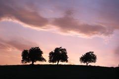 Drei Schattenbild-Bäume an der Dämmerung Stockfotos