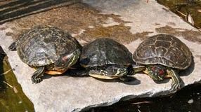 Drei Schildkröten auf einem Felsen Lizenzfreie Stockfotos