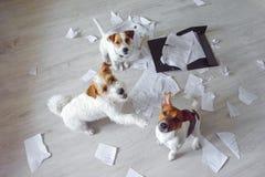 Drei schlechte Hunde mitten in der Verwirrung, die oben sitzt und schaut Ein Hundepunkte zu anderem mit seiner Tatze lizenzfreie stockfotografie