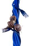 Drei Schnecken auf blauen Seilzügen stockfotos