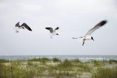 Drei Seemöwen, die über Strand fliegen. Lizenzfreie Stockfotos