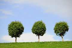 Drei sind einzelne Bäume Lizenzfreie Stockfotos