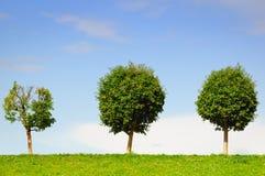 Drei sind einzelne Bäume Lizenzfreies Stockbild