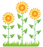 Drei Sonnenblumen. Stockbild