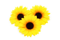 Drei Sonnenblumen getrennt Lizenzfreie Stockbilder