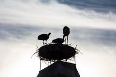 Drei Störche im Nest auf dem Dach des Hauses lizenzfreie stockfotos