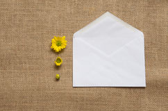 Drei Stadien von blühenden Gänseblümchen - camomiles auf der Leinwand Lizenzfreie Stockbilder