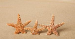 Drei Starfish im Sand Stockbild