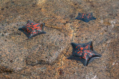 Drei Starfish ist nicht im Meer tief Lizenzfreies Stockfoto