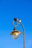 Drei Tauben, die auf der Lampe sitzen Lizenzfreies Stockbild
