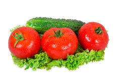 Drei Tomaten und Gurke Stockbild