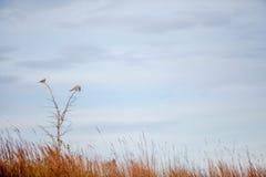 Drei Trauertauben in einem Baum Lizenzfreie Stockfotos