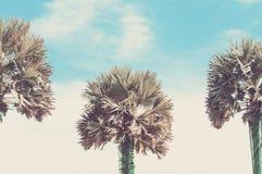 Drei tropische Palmen auf einem Hintergrund des blauen Himmels Getontes ima Stockfotos