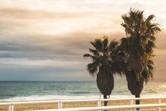 Drei tropische Palmen stehen auf dem Strand, sandigem Strand und Th Stockbilder