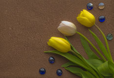 Drei Tulpen Lizenzfreies Stockfoto