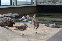 Drei Vögel im Vogelhaus Stockfotos
